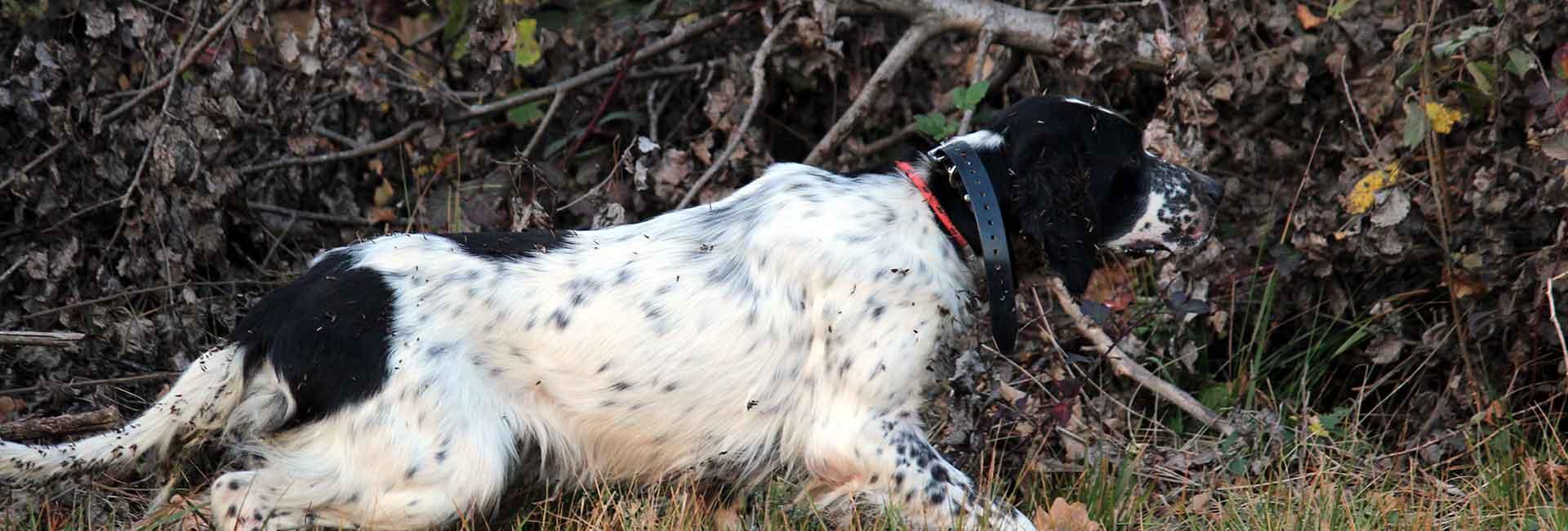 Addestramento cani da caccia