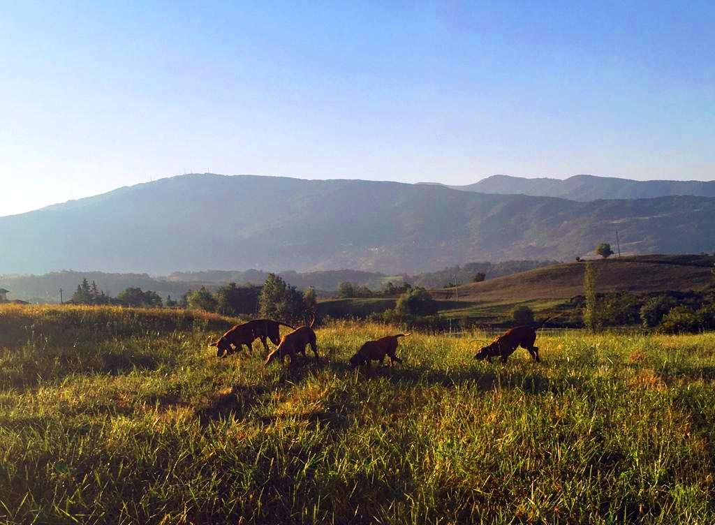 affitto-mute-da-cani-caccia
