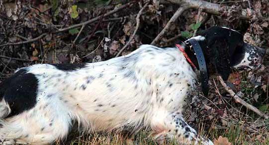 servizi-home-addestramento-cani-caccia