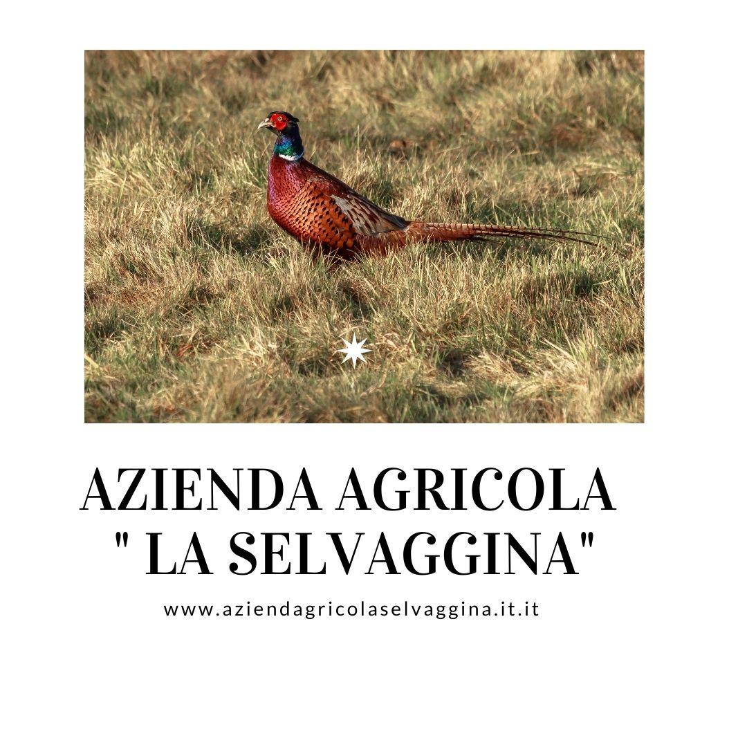 https://www.aziendagricolaselvaggina.it