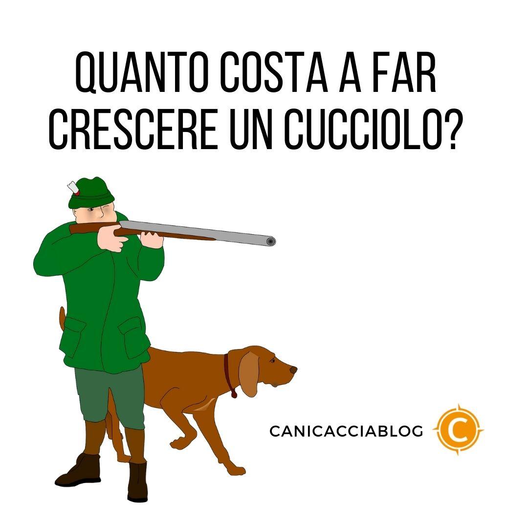 Quanto costa a far crescere un cucciolo da caccia?